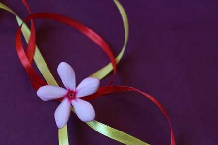 red and yellow ribbon with flower on purple background Stock Photo