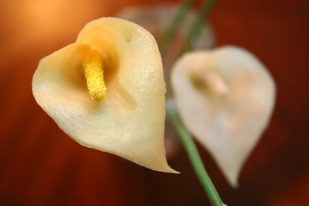 Flower closeup, Perfect for a background with space for text Imagens