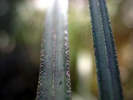 Macro Grasses