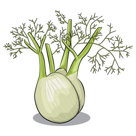 Fenchelvektor lokalisiert auf weißem Hintergrund. Hand gezeichnetes Karikaturillustrationsgemüse. Gesundes und veganes Essen.