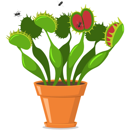 Venus fly trap in a pot. Vector cartoon flat icon of plants isolated on white background. Illustration