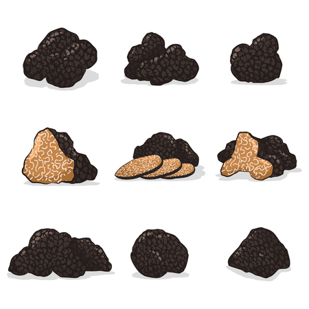 Black truffle mushroom vector cartoon set isolated on white background.