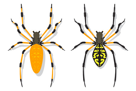Conjunto plano de dibujos animados de vector de araña de plátano aislado en un fondo blanco.
