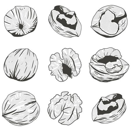 Walnut black silhouette. Nuts illustration vector set isolated on white background.