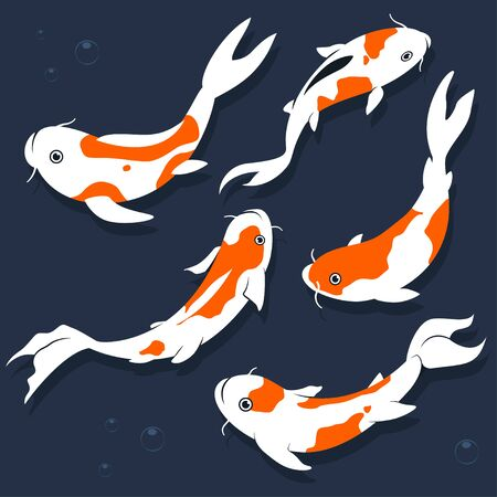 Koi fish vector cartoon flat set isolated on a white background. Ilustração