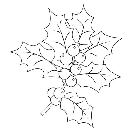 Coloring book page for adults and children. Christmas Holly Berry branch with leaves. Vector illustration.  イラスト・ベクター素材