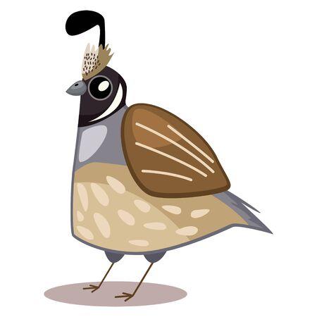 Quail bird cartoon vector illustration isolated on white background.