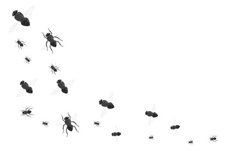 Flock of flies isolated on white background.