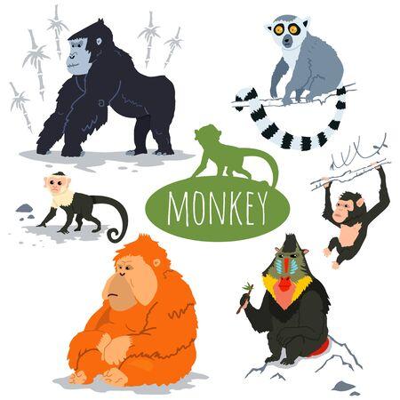 Monkey character vector set. Cartoon illustration of a gorilla, capuchin, lemur, orangutan, chimpanzee, mandrill.