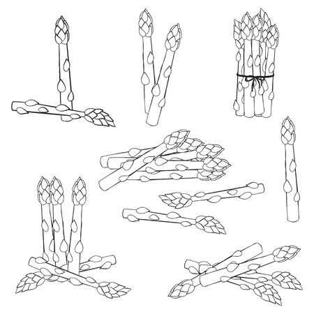 Asparagus vector sketch set isolated on white background. Иллюстрация
