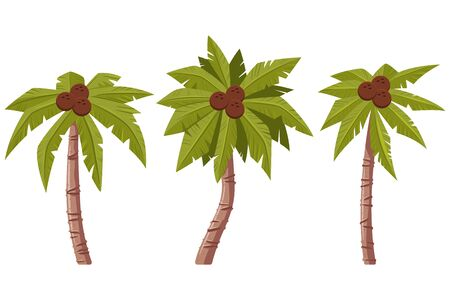 Palm tree with leaves and coconuts vector cartoon set isolated on white background. Illustration