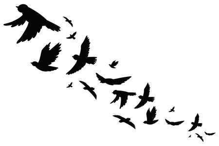 Flock of bird migration black silhouette in flying. Vector illustration isolated on white background. Vettoriali