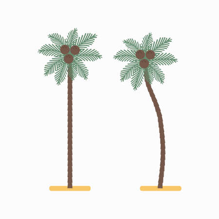 Palm tree with coconuts vector simple flat icon isolated on white background.