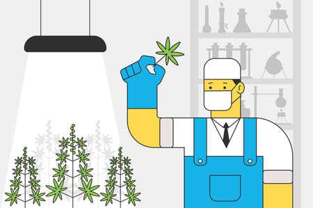Scientist with a cannabis leaf in medical laboratory grows marijuana. Vector cartoon illustration.