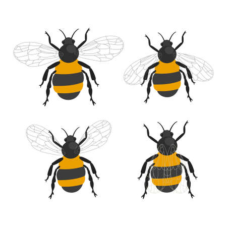 Bumble bee insects vector cartoon flat icons set isolated on a white background. 向量圖像