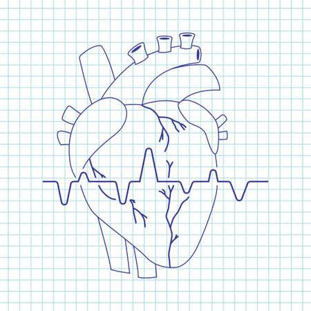Human heart vector line art icon of internal organ isolated on background. Illustration