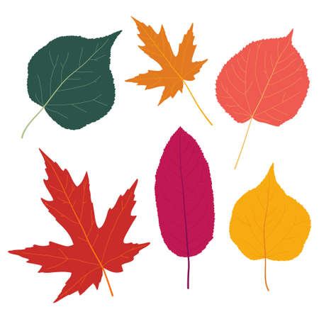Autumn leaves vector flat silhouettes set isolated on white background.