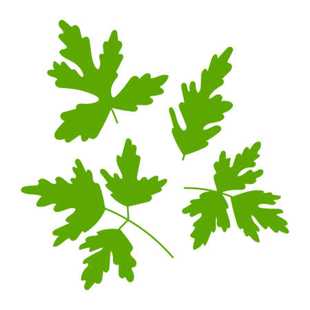 Parsley twigs and leaves vector set isolated on a white background.