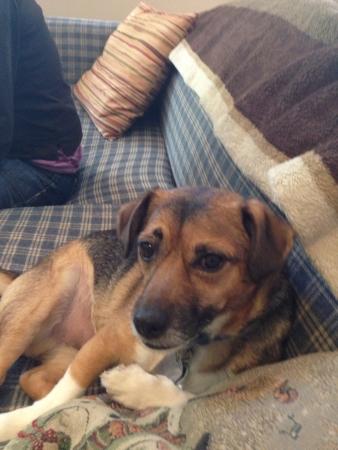 ソファでリラックスした犬 写真素材