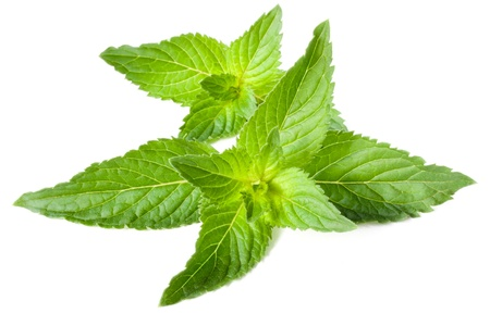 Leaves of fresh fragrant mint isolated on white background