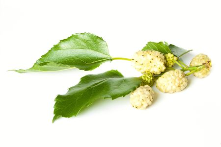 Ripe yellow mulberry isolated on a white background Stock Photo