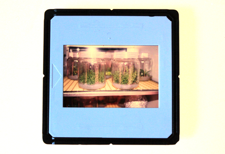 vitro: Deslice con experimentos in vitro escena