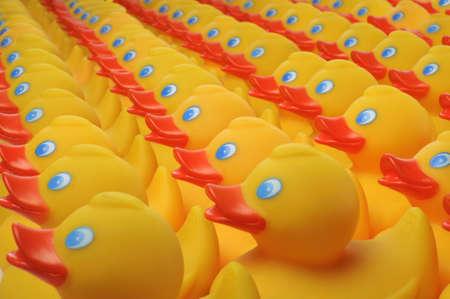 Yellow plastic ducks arranged in rows Stock Photo