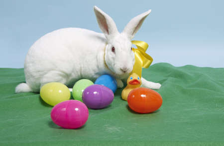 White rabbit with colored plastic eggs and a plastic duck