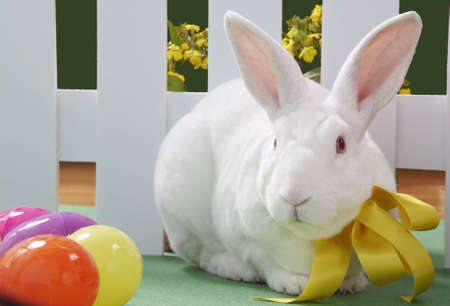 Albino rabbit wearing a bow sitting by plastic eggs.