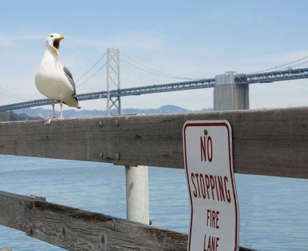 Seagull crying out next to a no stopping sign on a pier