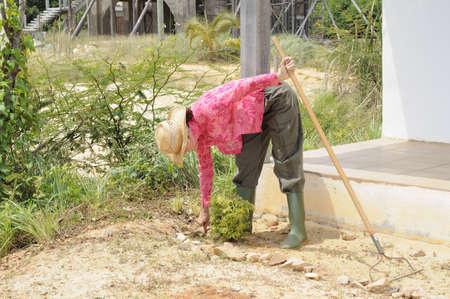 A woman planting a shrub in sandy earth Stock Photo