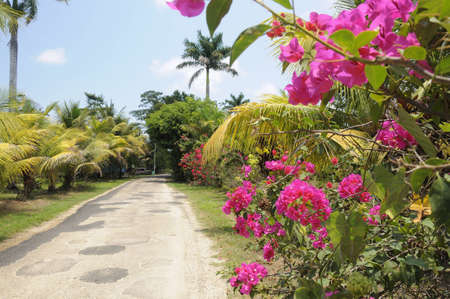 Narrow road running through a village in Belize