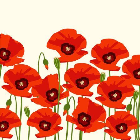 red poppy: The red poppy flowers. Background. Vector illustration