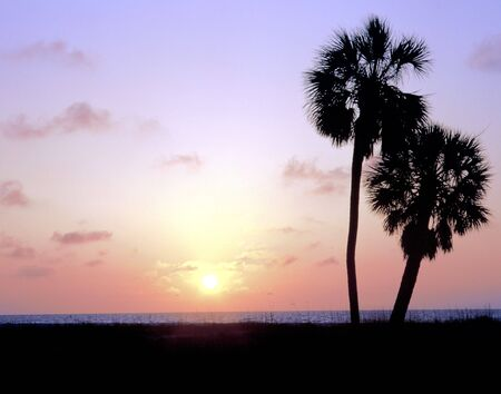 2 palm trees silhouetted at sunset