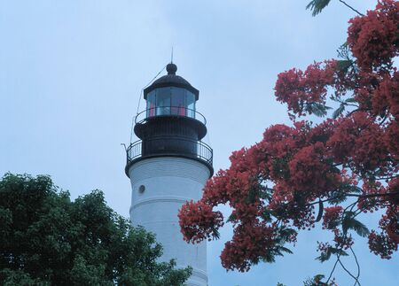 key west lighthouse framed with two trees Standard-Bild