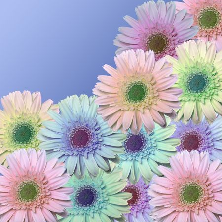daisys of many colors on a blue backroun with room for copy in the upper riaght