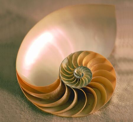 a sea shell laying on the sand
