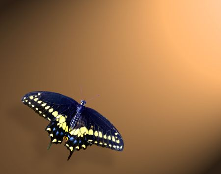 swallow tail butterfly in lower left on gold back round with\ spot lite frome upper right