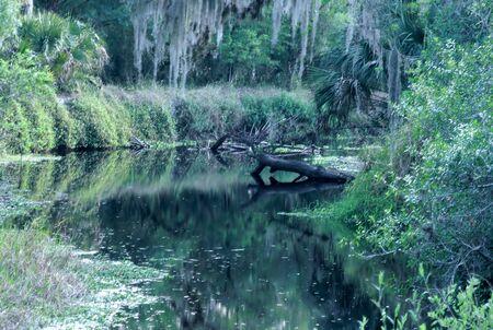 brusch: wetland of florida