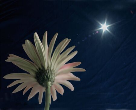 looking up at pink daisy with sunburst