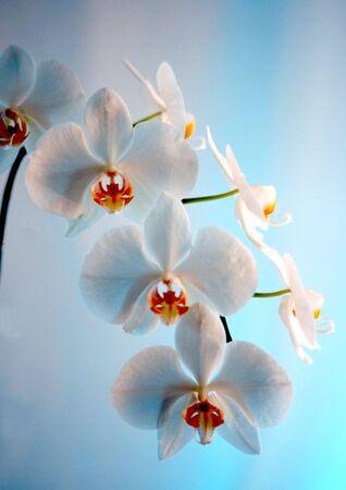 蘭の枝をいくつかの花のクローズ アップ 写真素材