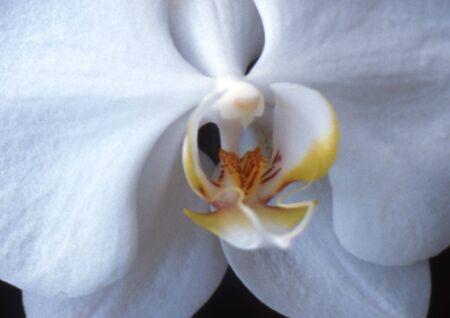 蘭の花をクローズ アップ
