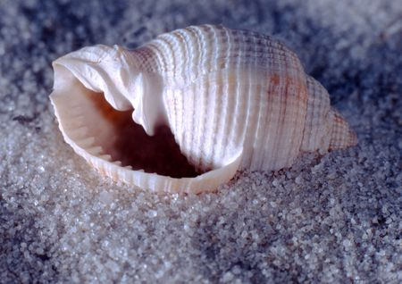 a sea shell laying on a bed of sand