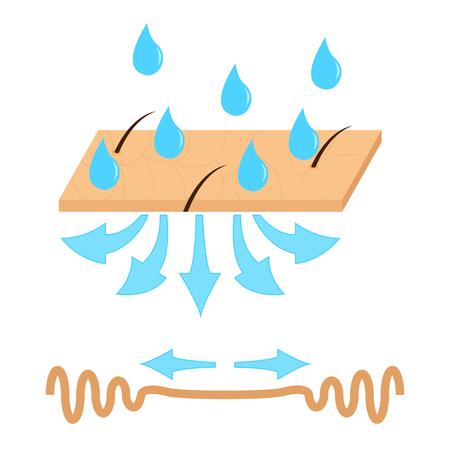 idratazione della pelle e delle rughe illustrazione vettoriale. Vettoriali