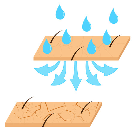Skin hydration and dry skin sectional view vector illustration. Illustration