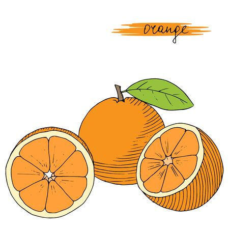 palatable: Hand drawn oranges with leaves isolated on white background. Vector illustration.