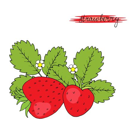 Hand drawn strawberries with leaves and flower isolated on white background. Vector illustration.