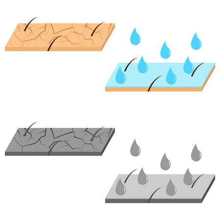 Skin hydration and dry skin sectional view vector illustration. Çizim