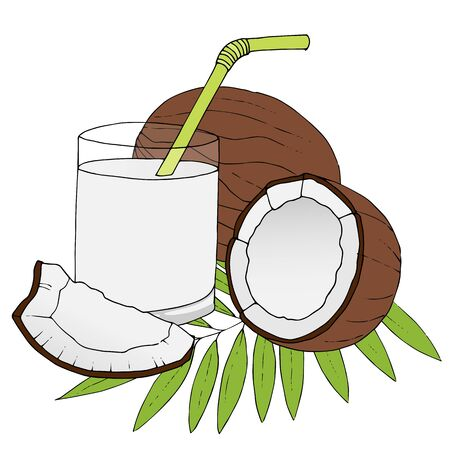 dulcet: Hand drawn coconuts with leaves isolated on white background. Vector illustration.
