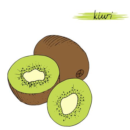 dulcet: Hand drawn kiwi isolated on white background. Vector illustration. Illustration